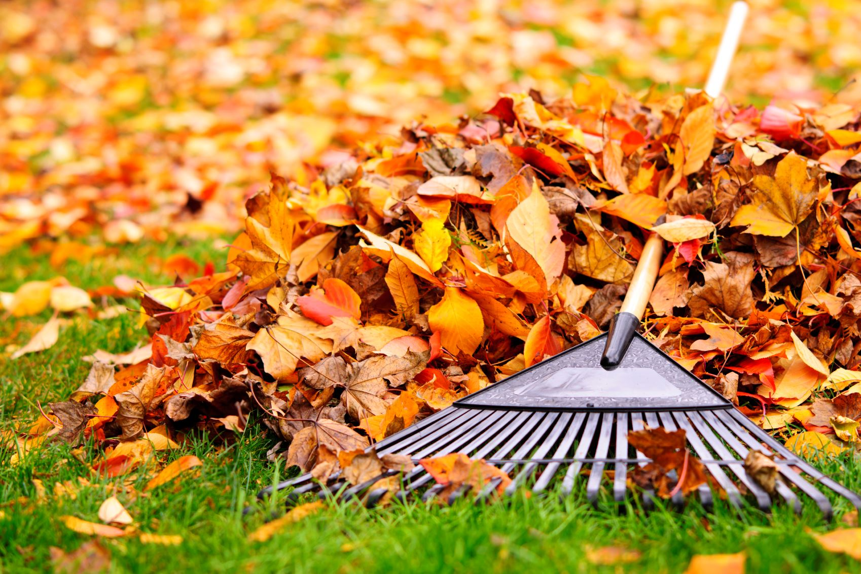 Fall Rake on Leaf Pile